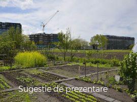 Vanzare  terenuri constructii  6953 mp Ilfov, Teghes  - 0 EURO