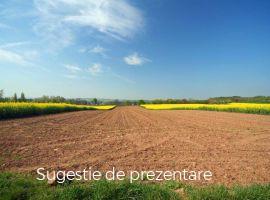Vanzare  terenuri agricol  60 ha Hunedoara, Baia de Cris  - 3000 EURO
