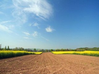 Vanzare  terenuri agricol  5542 mp Iasi, Mogosesti  - 27710 EURO