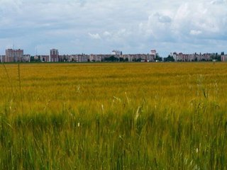 Vanzare  terenuri agricol  40 ha Tulcea, Iazurile  - 50000 EURO